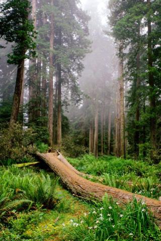 森林树木壁纸-3g软件-3g门户