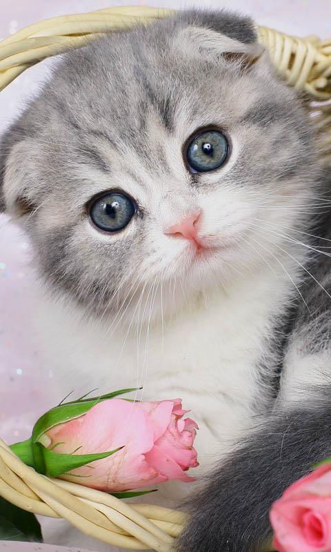 语言:中文 推荐:★★★☆☆ 简介:超可爱超萌的小猫咪啊,越看越爱!